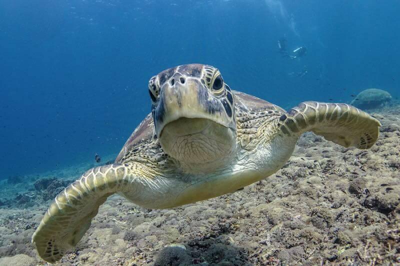 snorkel en Islas Gili