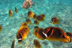 Blue Lagoon Snorkeling en Padangbai