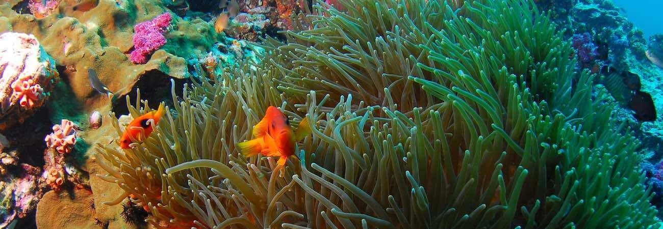 Crystal Bay Snorkeling Nusa Penida