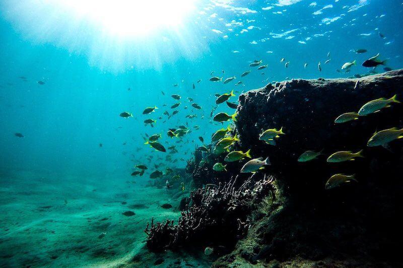 Tanjung Jepun Snorkeling