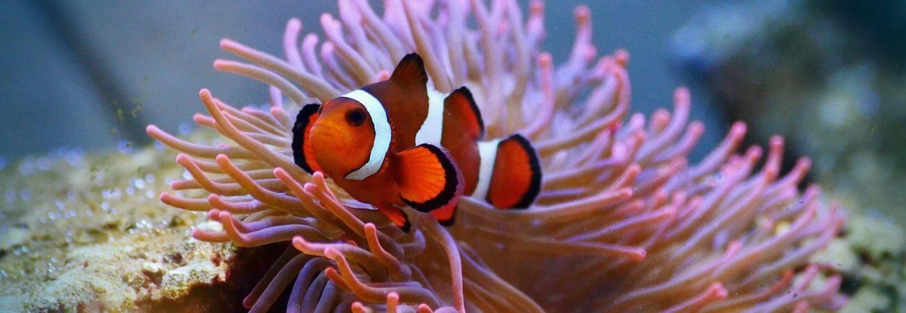 El mejor buceo en Bali