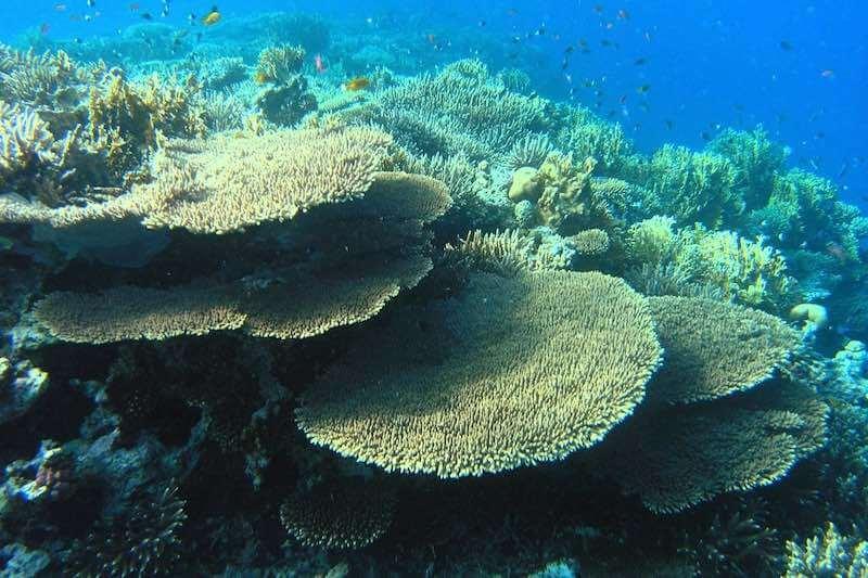 Corales en Batu kelebit