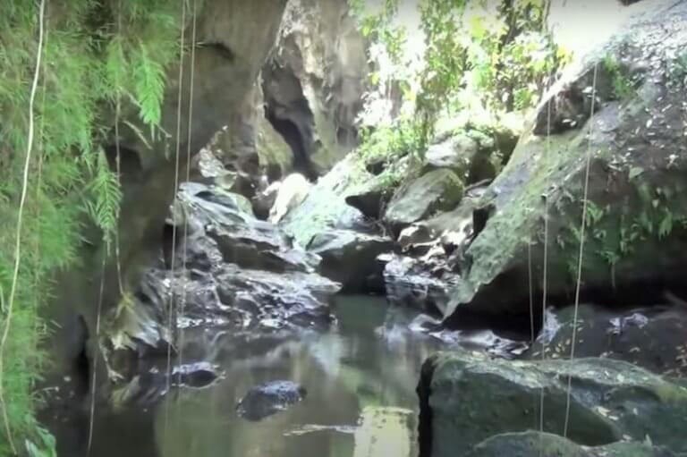 selva tropical en hidden canyon bali