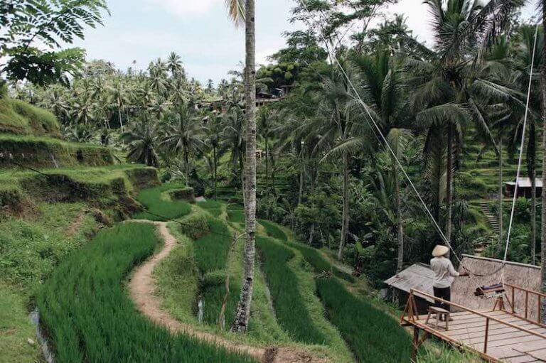Columpios de Tegalalang Terrazas de Arroz