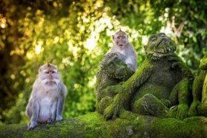Sacred Temple Monkey Forest Ubud Bali